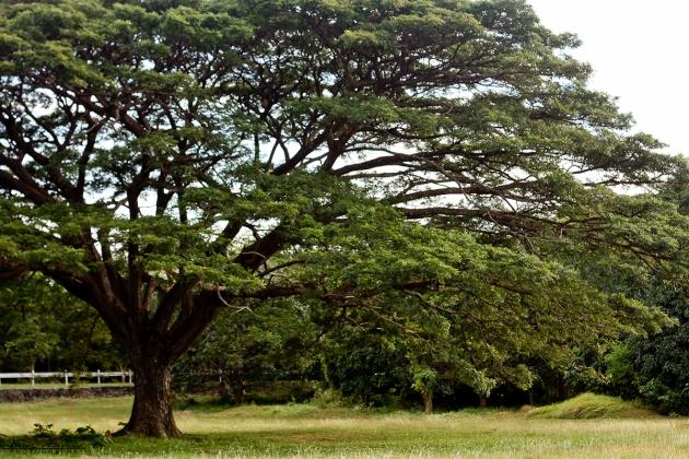 Corregidor2012_Day1-37