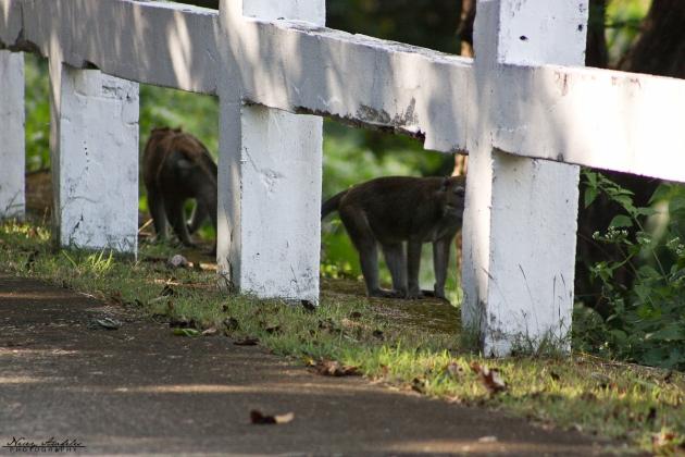 Corregidor2012_Day2-52