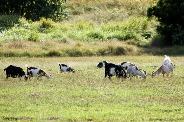 Corregidor2012_Day2-54